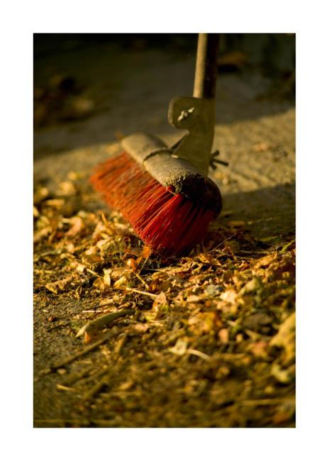 Autumn Leaves Mark Reddy Photography Trinity Digital Studios