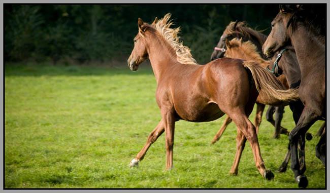 Galloping Horses Mark Reddy Photography Trinity Digital Studios