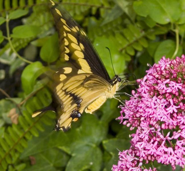 Butterfly Mark Reddy Photography Trinity Digital Studios