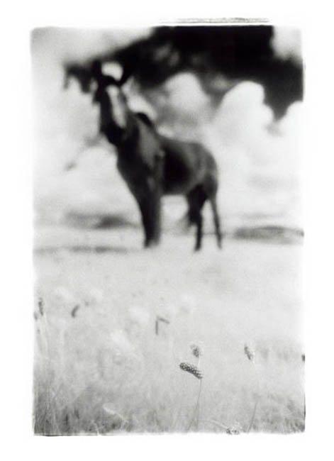 Horse Clare Mark Reddy Photography Trinity Digital Studios
