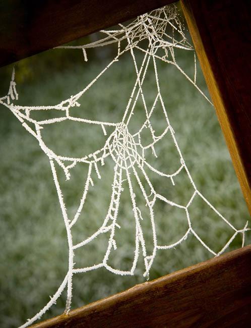 Spiders Web Mark Reddy Photography Trinity Digital Studios