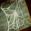 Spiders Web Mark Reddy Photography Trinity Digital Studios